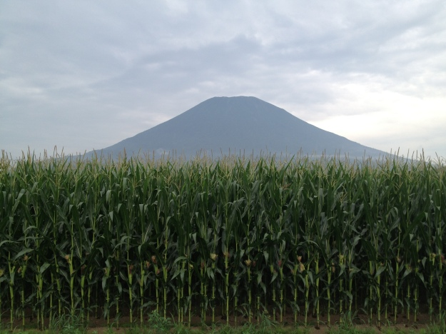 A mountain of corn