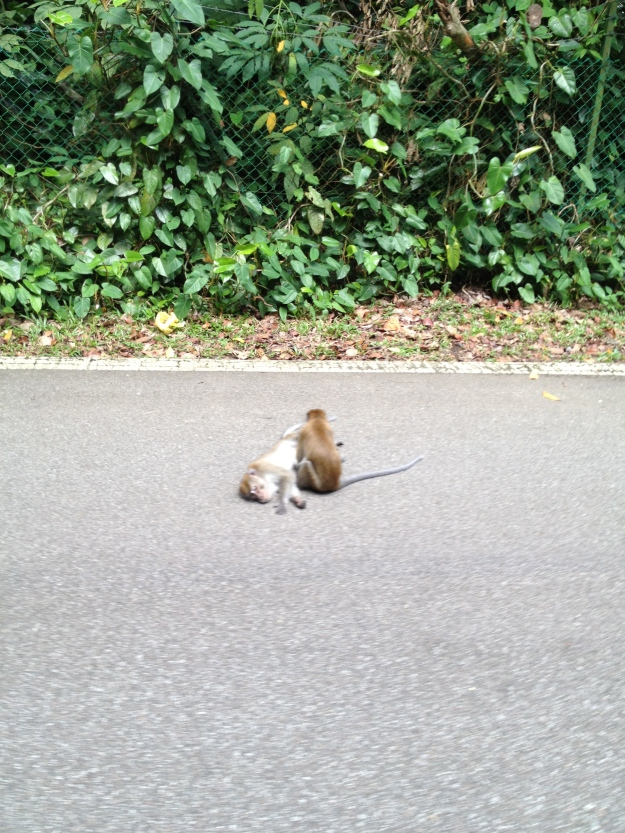 """""""Ah, should we be doing this on the road?""""... """"Get your stinking paws ON me you damn dirty ape"""""""