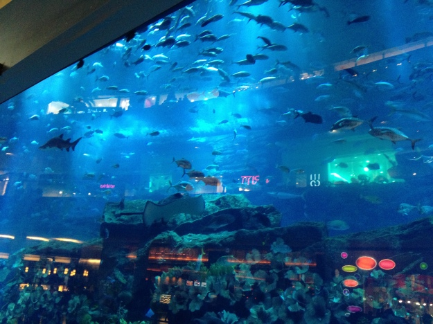 Biggest mall, with the biggest fish tank... Fucking show offs